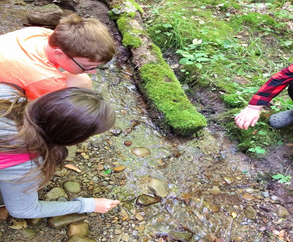 campers explore a stream during a lesson group