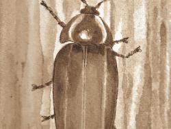 winter lightning bug
