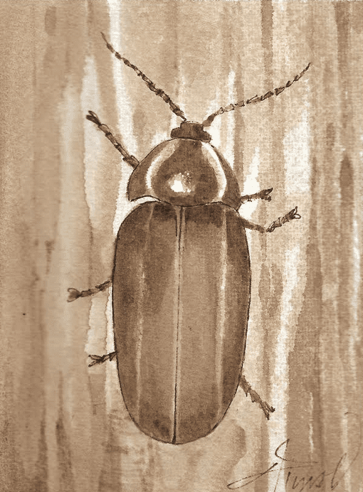 winter lightning bug