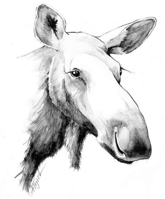 moose by adelaide tyrol