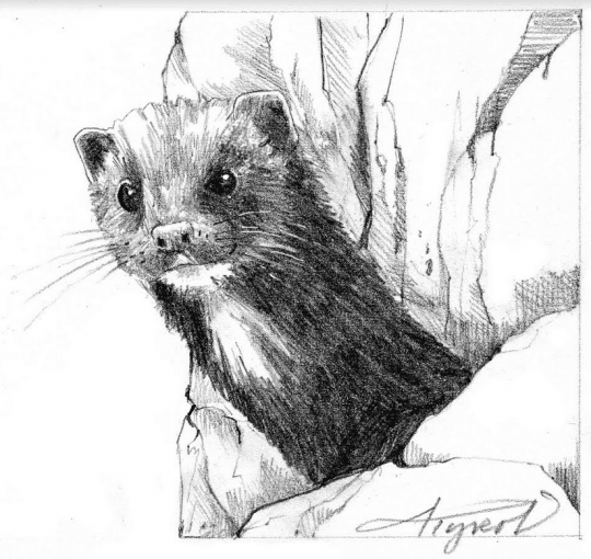 otter by adelaide tyrol
