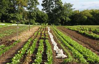 Soil Health on Market Farms workshop