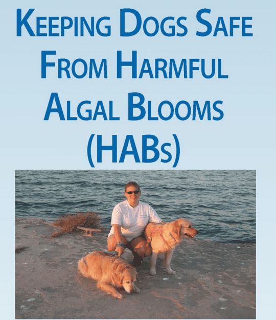 keeping dogs safe from harmful algal blooms