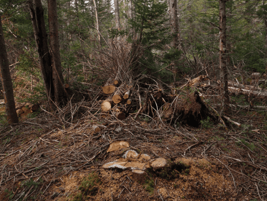 A typical view on a class II community connector trail where 1000 trees a mile are destroyed by state agencies provided by Protect