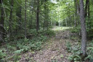 newcomb trail