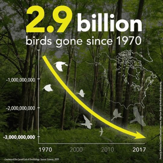 bird decline chart
