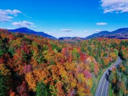 fall foliage courtesy roost
