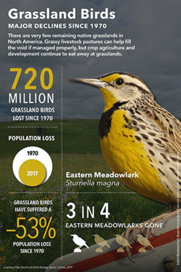 grassland birds graphic