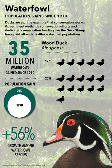 waterfowl graphic