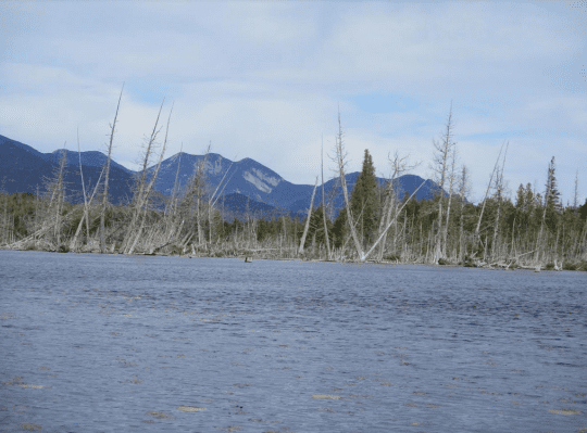 mountains and trees at Boreas Ponds