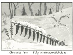 Christmas Fern by Adelaide Tyrol