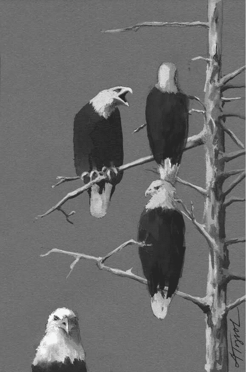 bald eagles by adelaide tyrol