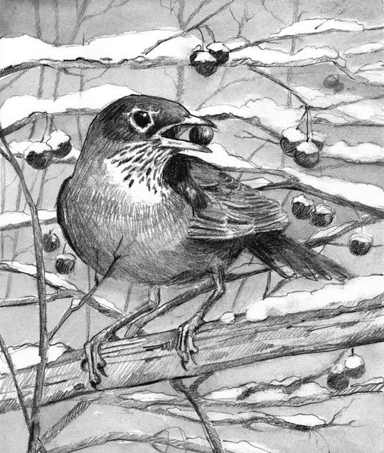 winter robin by adelaide tyrol