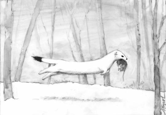 winter weasel by adelaide tyrol