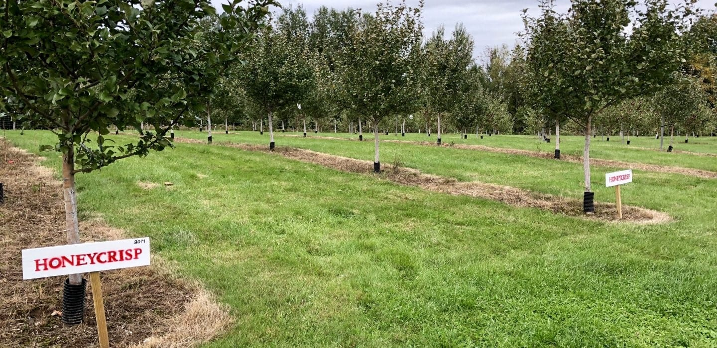 Honeycrisp Planting at Prairie's Orchard