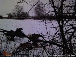 eagle trail cam pics