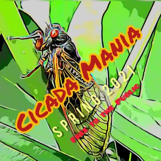 cicada mania
