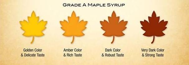 maple grades
