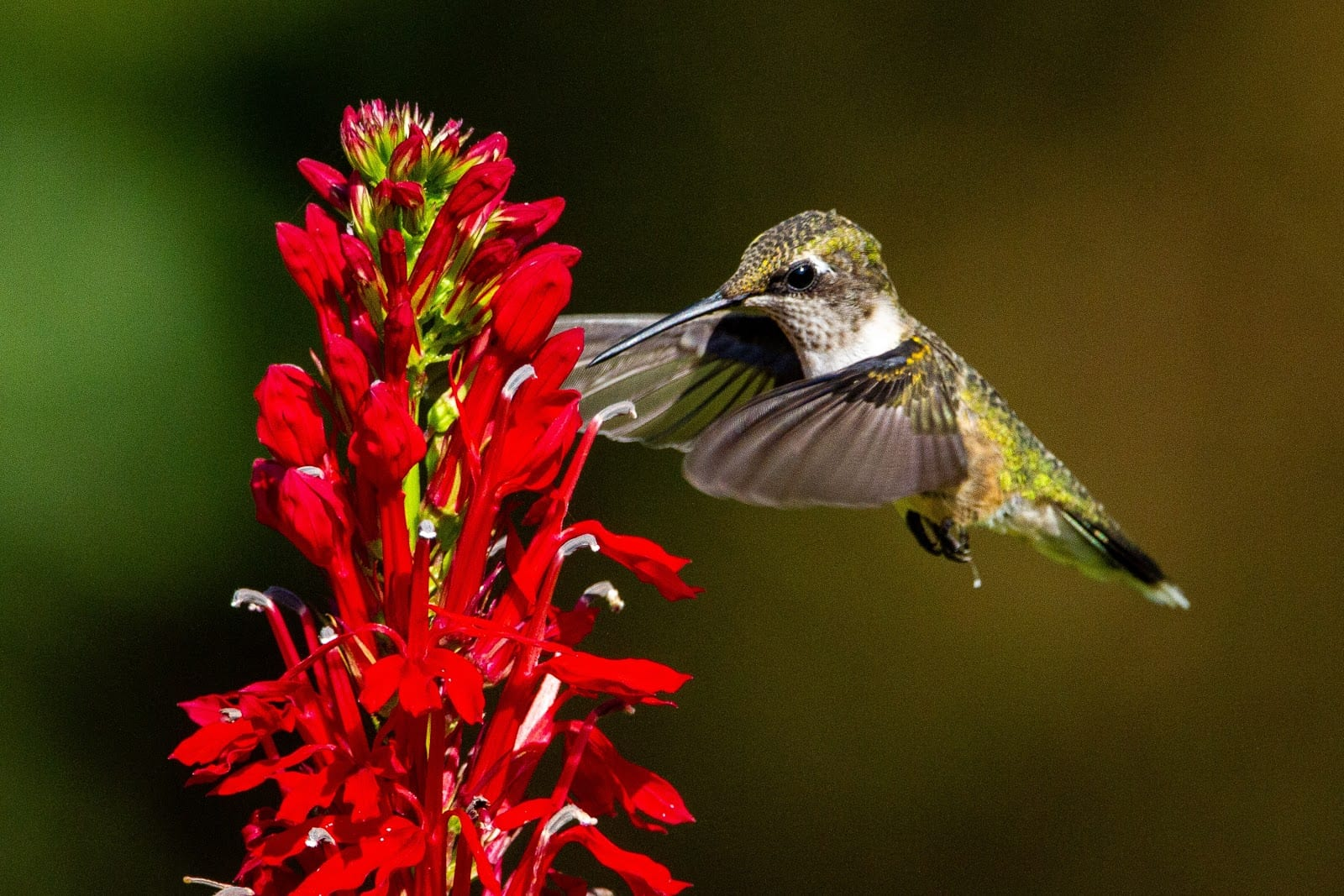 pollinator plant sale