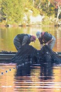 fishermen checking nets for fish