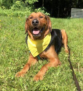 happy dog bark in the park