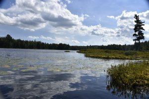 bog wetlands