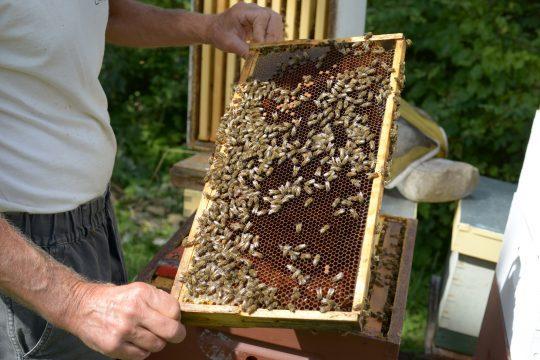 honey hive frame